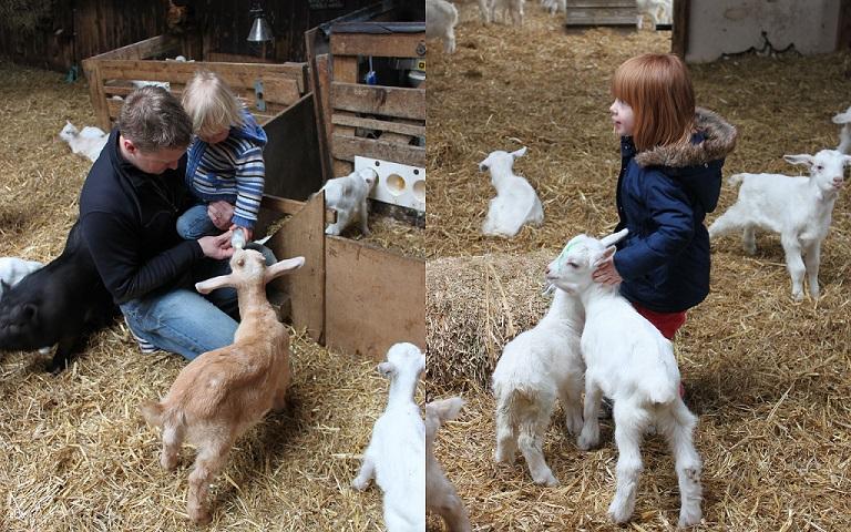 wat gaan we doen de geitenboerderij maai