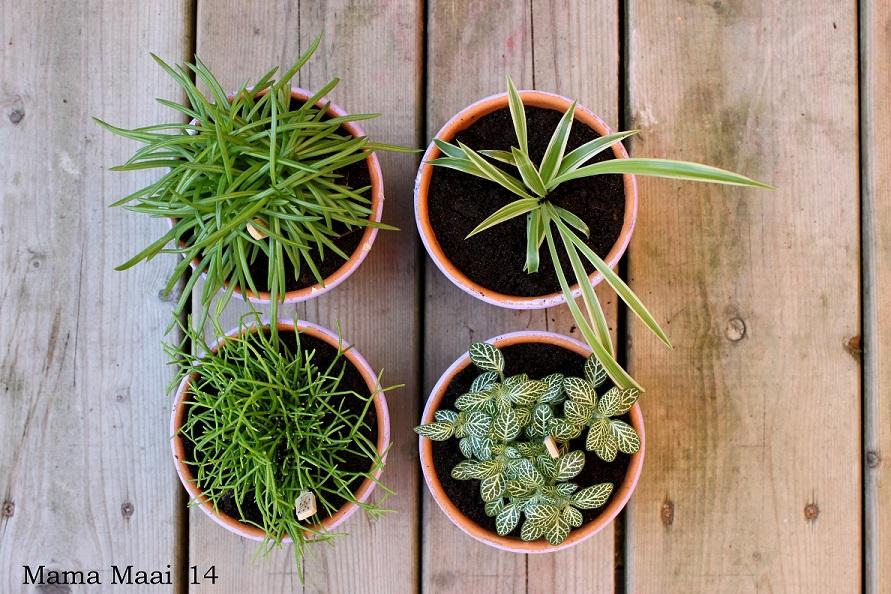 diy gekleurde plantenpotjes