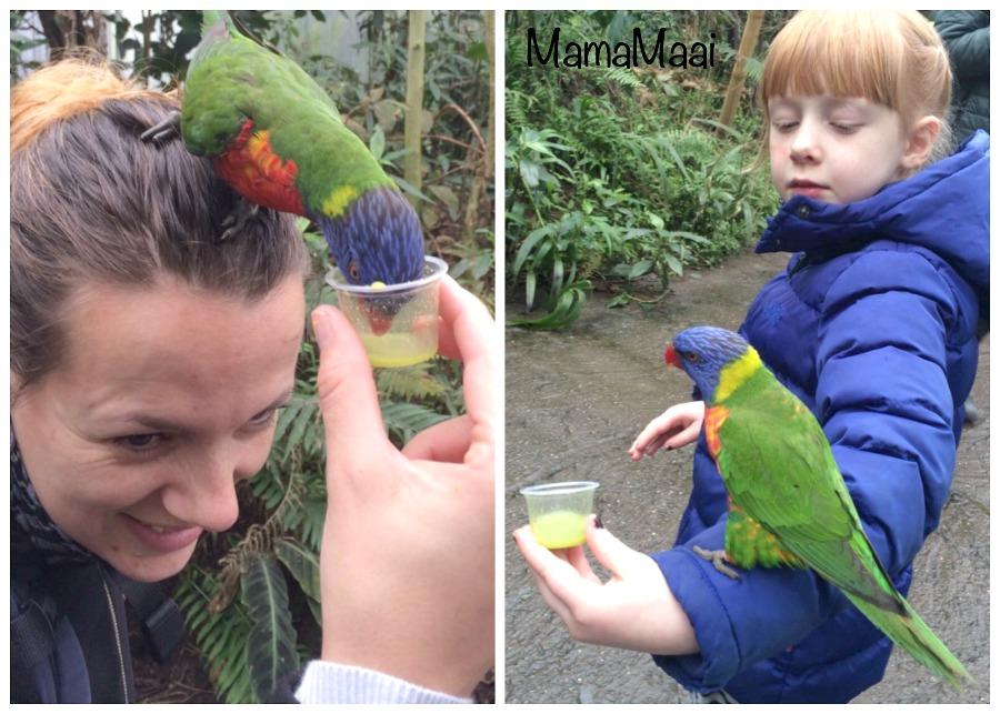 wildlands adventure zoo Emmen, Drenthe, dagje uit, dagje weg met kinderen, Dierentuin