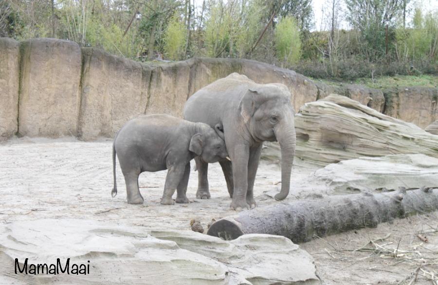 wildlands adventure zoo Emmen, dagje uit, dierentuin, dagje weg,