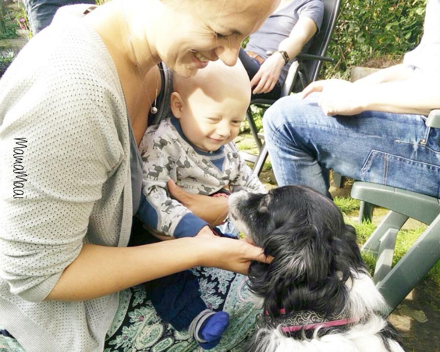 waar op letten aanschaf huisdieren