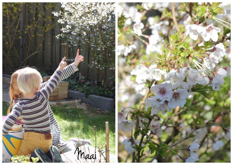lente, voorjaar, picknicken, bloesem, tuin