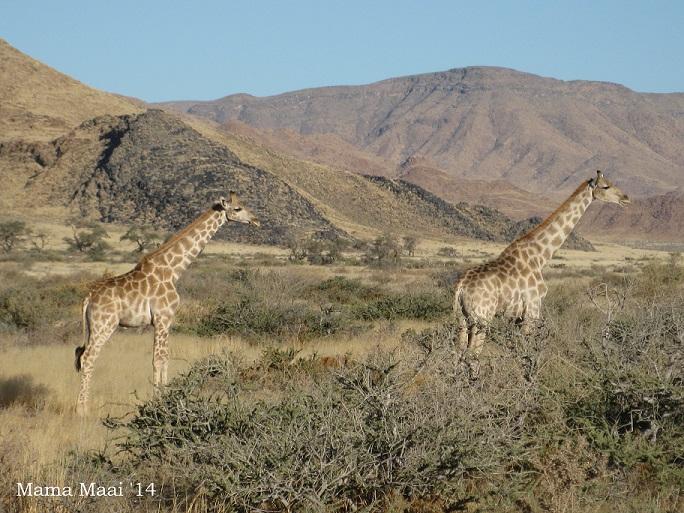 afrika reis 1