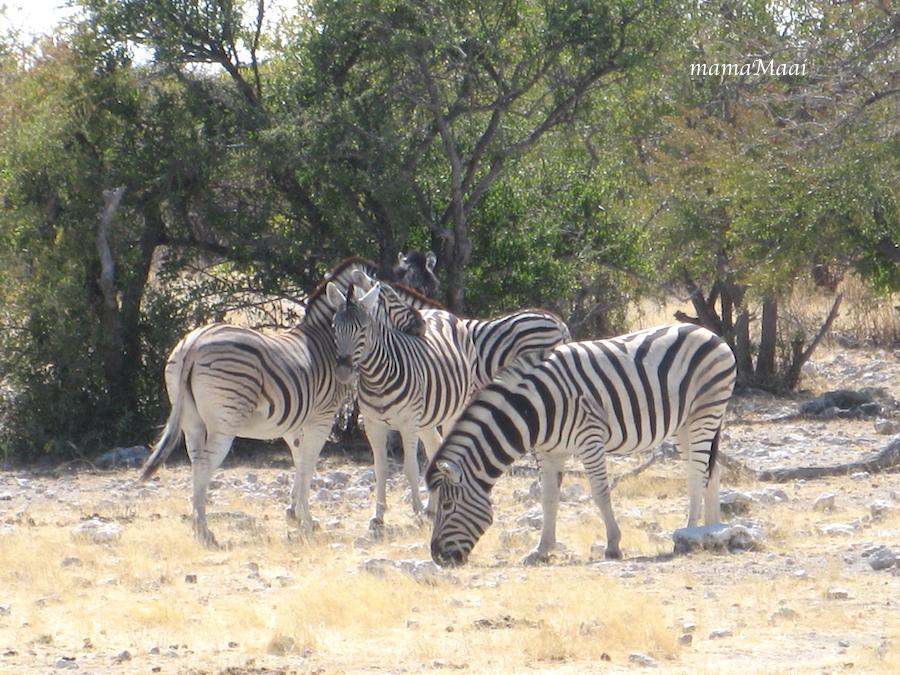 Afrika, namibie, quad biken, reizen, etosha
