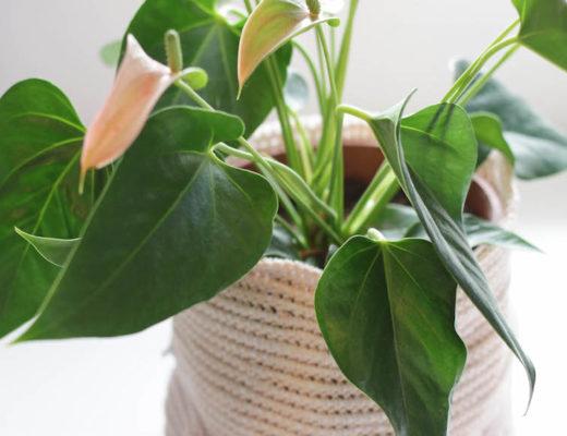 gehaakte plantenmand, mand voor plant haken, crochet basket, haken, diy, creatief, creatief met wol