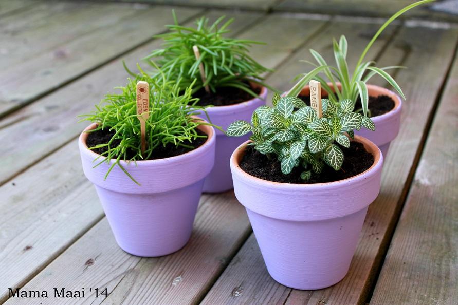 gekleurde plantenpotjes