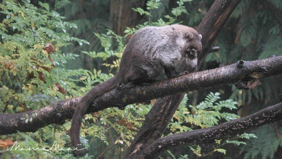 apenheil apeldoorn dierenpark