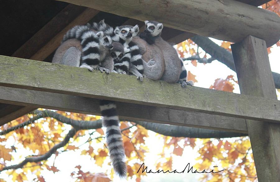 dierenpark apenheul apeldoorn