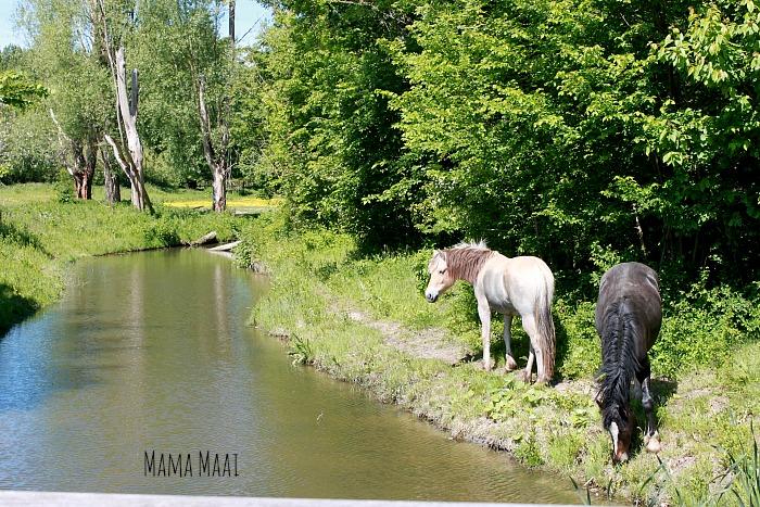 belevenissenbos paarden