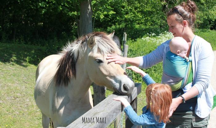 belevenissenbos paarden aaien
