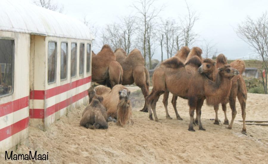 wildlands adventure zoo Emmen, dagje uit Drenthe, dagje weg met kinderen, dierentuin