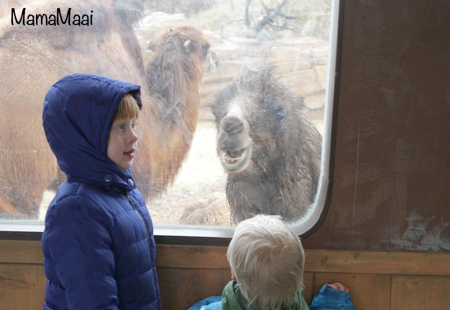 wildlands adventure Zoo Emmen, dierentuin, Dagje weg kinderen, uitje