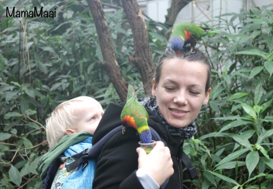 wild lands adventure zoo Emmen, dierentuin, dagje uit Drenthe, dagje weg met kinderen