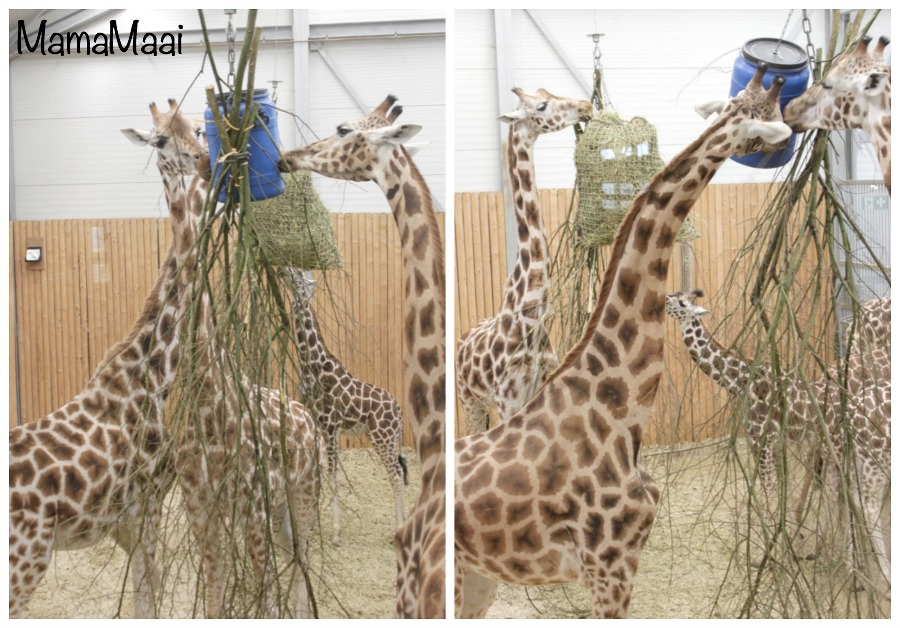 Wildlands adventure Zoo Emmen, dagje uit Drenthe, dagje weg met kinderen, uitjes, dierentuin