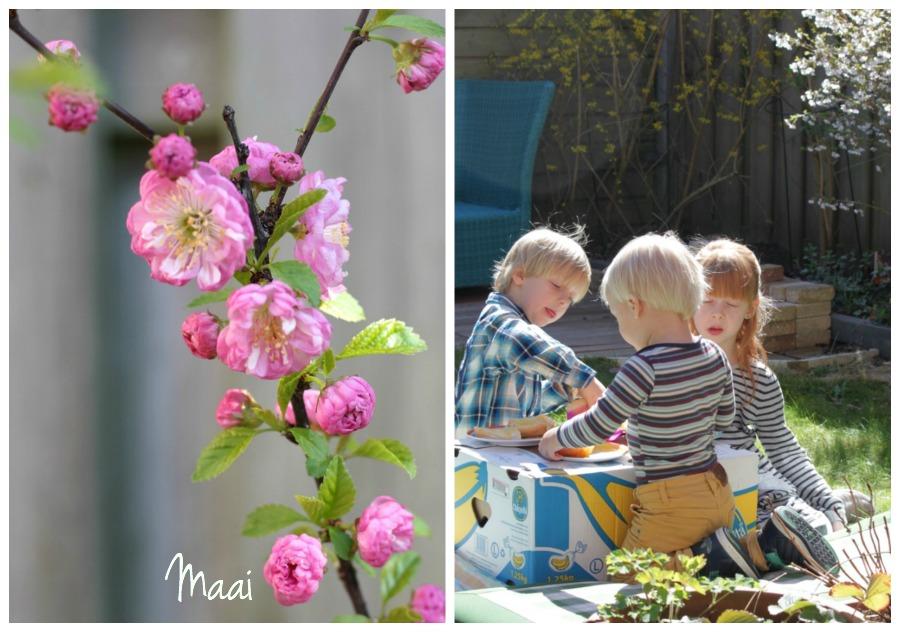 lente, voorjaar, bloesem, tuin, picknicken